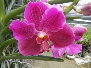 Orchids 4 Judgefloro